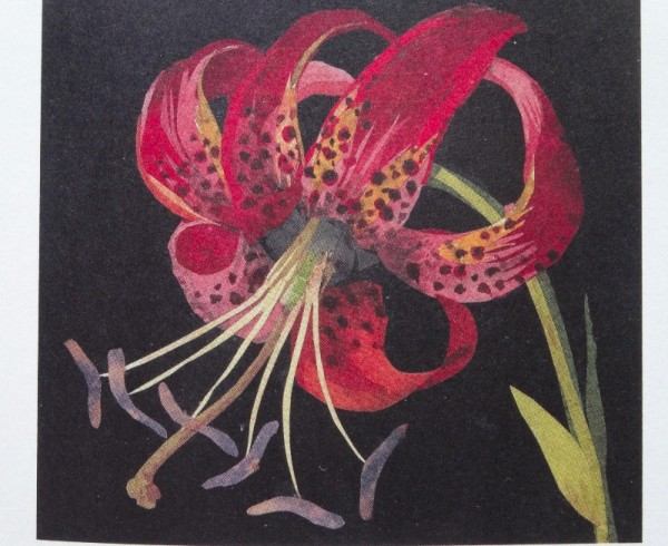 Detail of Mrs Delany's Canada Lily (from Molly Peacock: The Paper Garden; Bloomsbury 2011)