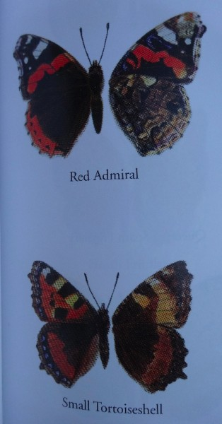 Red Admiral and Small Tortoiseshell: very similar when viewed high up on a church window. (Closed wings on the right)