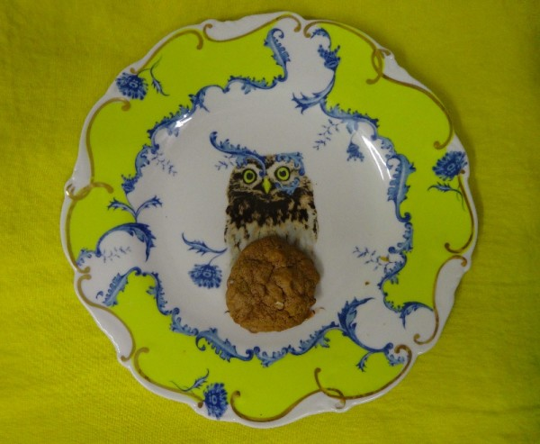 Beacon Hill Cookie on Anthropologie plate