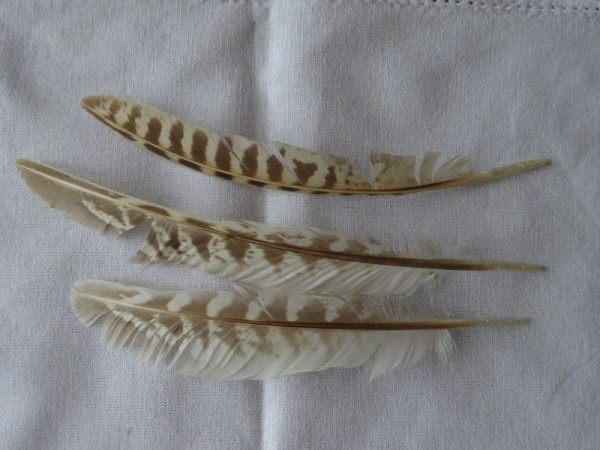 Red lite feathers